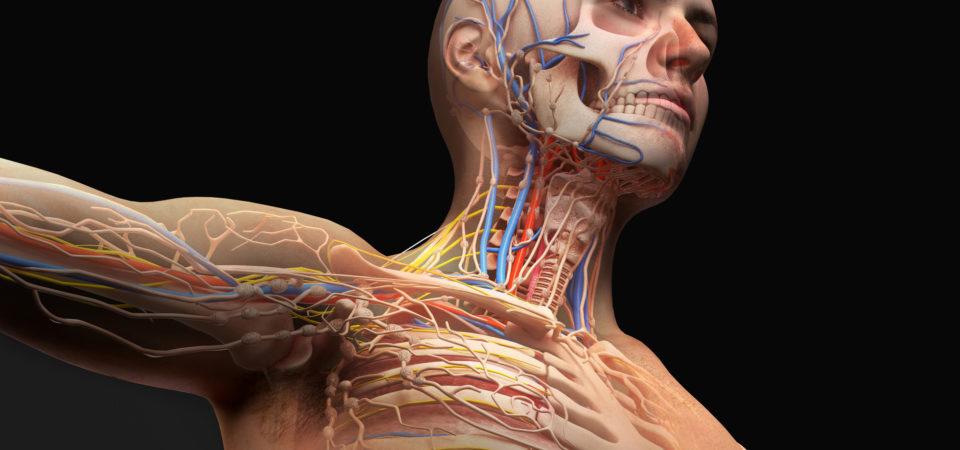 医学部では解剖の実習があるの?人体解剖実習の内容を紹介